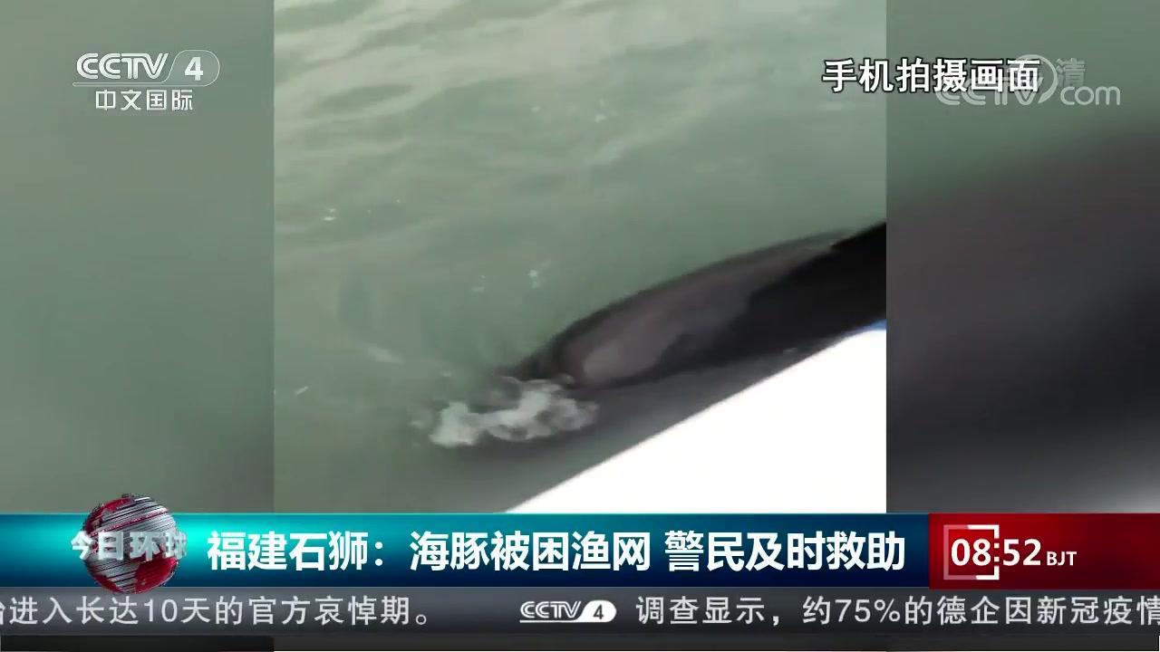 福建石狮:海豚被困渔网 警民及时救助安卓版
