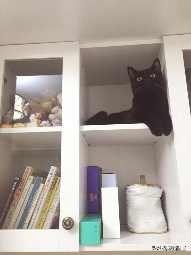 猫的智商到底能有多高?看网友家小黑猫的神操作吧-第15张图片-深圳宠物猫咪领养送养中心