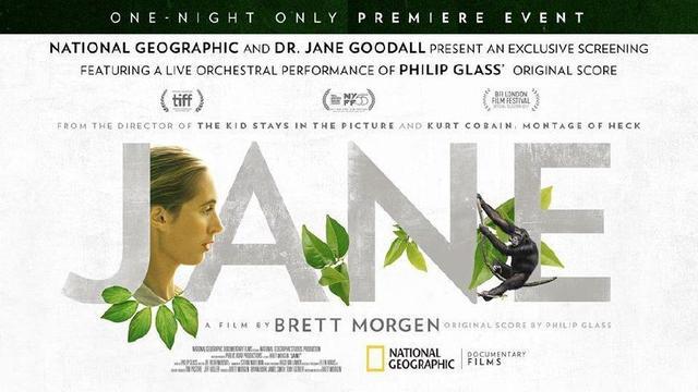 记录电影《珍》,你是否还记得课本里珍博士和黑猩猩的故事?