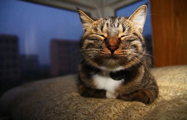 猫咪智商可以有多高,与人类差别大么?不仔细观察,真的难以想象
