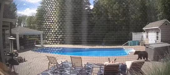 视频疯传!美国男子在自家别墅泳池旁睡觉 竟被一头黑熊一掌拍醒-第1张