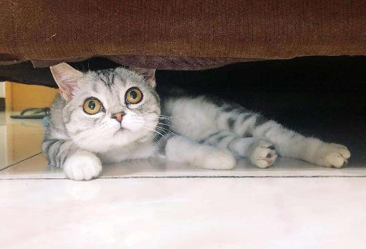 猫咪在家里上蹿下跳,这是天性使然,铲屎官可千万别去改变它们-第6张图片-深圳宠物猫咪领养送养中心