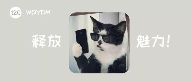 为什么猫咪在发情期间喜欢到处乱尿,并且气味比平时的尿液难闻?-第1张图片-深圳宠物猫咪领养送养中心