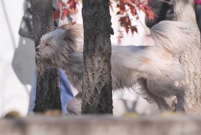 狂犬疫苗一针难求,哈尔滨\\ 全球新闻风头榜 第3张