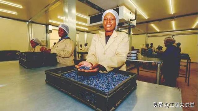 津巴布韦蔬菜水果业拔尖公司