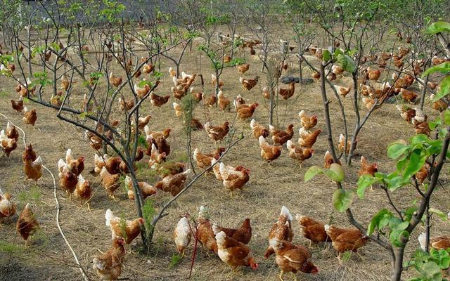 农业公司加盟创业选择靠谱的项目,年赚百万不是梦