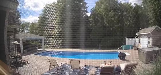 视频疯传!美国男子在自家别墅泳池旁睡觉 竟被一头黑熊一掌拍醒-第2张