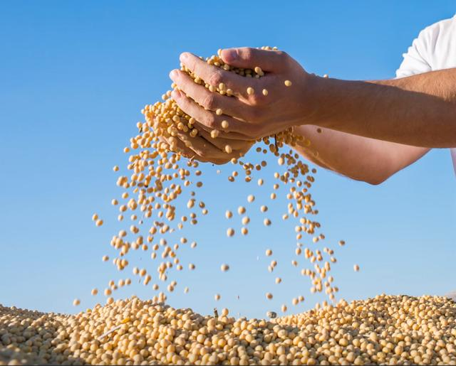 1170000吨,中国买家向美国送上大豆订单!为何非得买美农产品?-今日股票_股票分析_股票吧