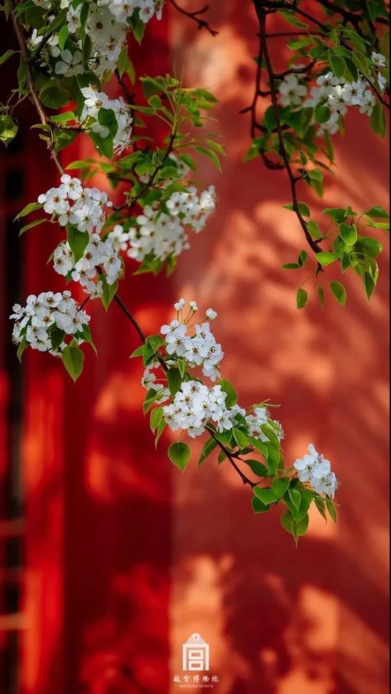绝句·迟日江山丽,看,故宫里的春天