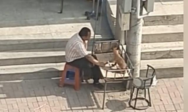 太有爱!大叔太阳底下陪狗狗输液,一直牵着它的手,网友:铁汉柔情