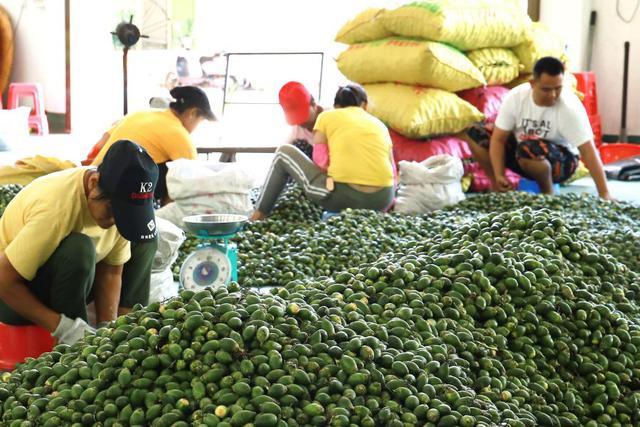 2020年海南槟榔生果市场前期表现及发展趋势展望-今日股票_股票分析_股票吧