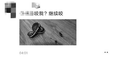 宁波男子凌晨玩蛇被咬后剪掉蛇头发朋友圈 经鉴定为国家二级保护动物被刑拘 全球新闻风头榜 第3张