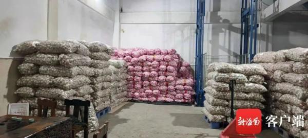葱姜蒜价格上涨?海南正在加大进货量