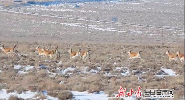 每日甘肃网12月20日甘肃热点新闻回顾插图1