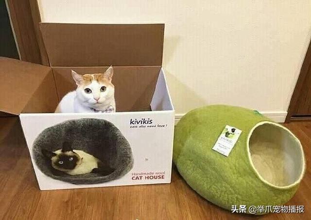 有一种猫咪是关不住的,请欣赏知名电影海报——喵申克的救赎-第6张图片-深圳宠物猫咪领养送养中心