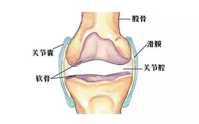 警惕——膝关节软骨损伤! 软骨覆于膝关节的骨面,虽然只有薄薄一层,但它的作用却很大,假如没有膝软骨的保护,那么膝关节处的骨头就会互相碰撞、摩擦,那膝盖就会遭受经年累月严重的损伤,因此,注重膝软骨的状况