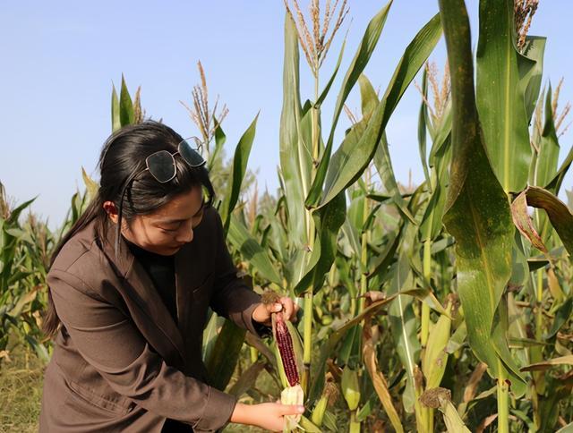 彩色玉米、凤梨萝卜铺就鲁山女大学生返乡创业路插图