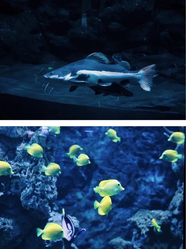 武汉海昌极地海洋公园游玩攻略 别再刷蓝天白云穿越两极开启深海探险