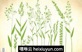 手绘绿色植物设计素材Wild herbs, hair grass, wheat