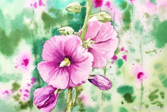 水彩花卉教程:怎么画蜀葵