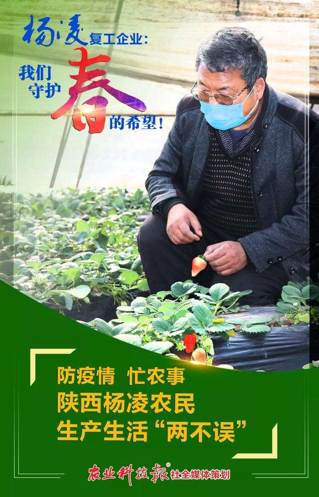 """陕西杨凌:防疫情忙农事,生产生活""""两不误"""""""