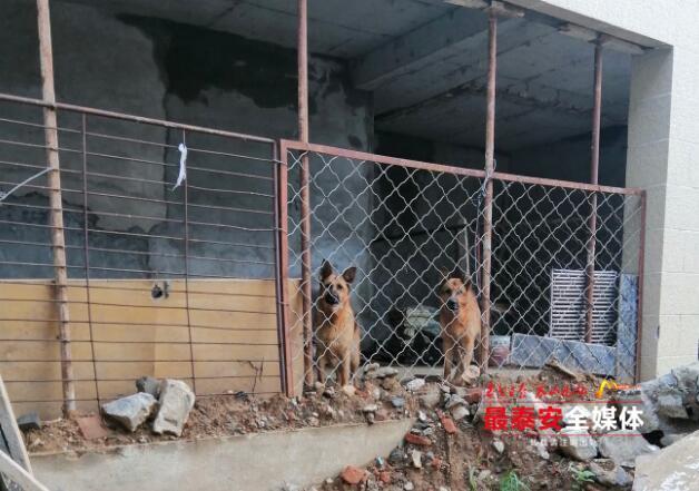 违规养犬,德国牧羊犬主人被警告