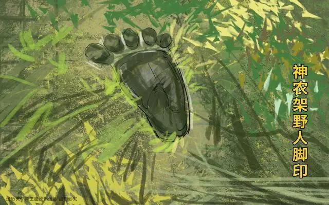 湖北神农架密林为何成禁区?除人烟稀少外这一原因连专家都无法解释