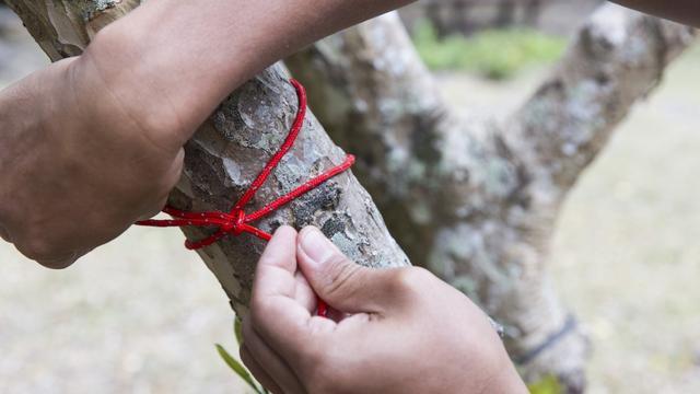 实用野外露营教学,学会5种常用绳结从此露营不必怕