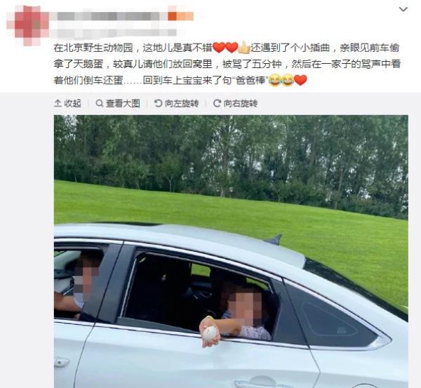 北京野生动物园游客偷拿天鹅蛋 遭其他游客制止被迫放回窝里