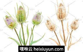 手绘水彩大蓟种子设计素材Watercolor Thistle Seed Heads