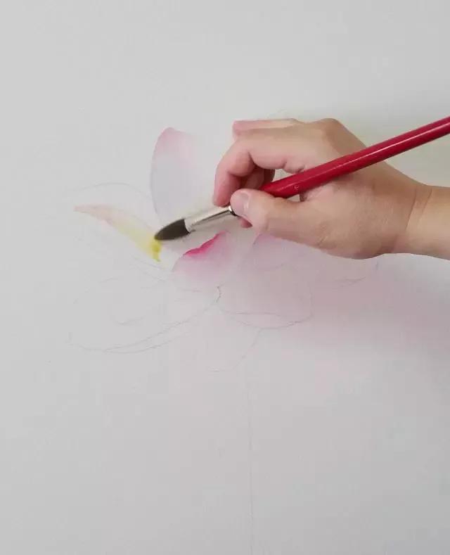 水彩画入门:一个超详细的水彩荷花教程