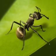 蚂蚁地下王国优化版