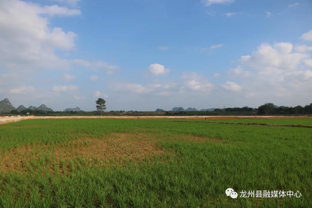 钟磊到龙州镇、逐卜乡调研旱改水项目推进情况 崇左论坛